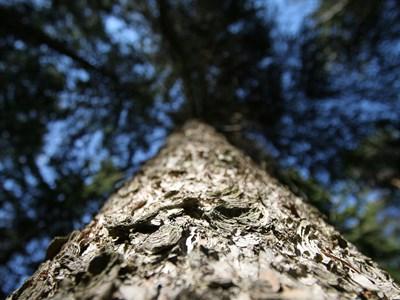 Om trädportalen. Foto: Michael Krikorev