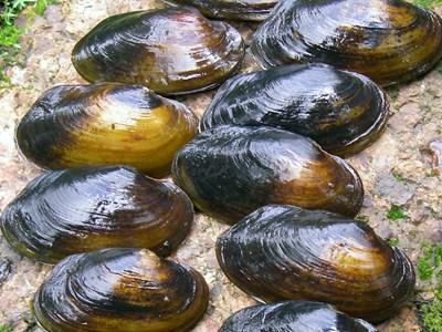 Om musselportalen. Foto: Jakob Bergengren