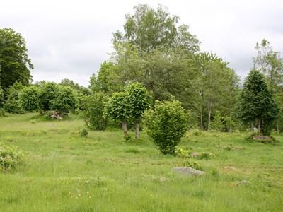Odlingslandskap