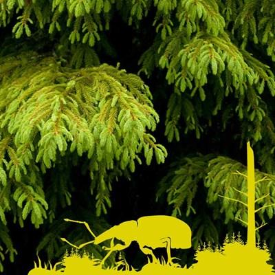 skogsskada750.jpg