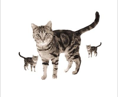 copy-cat-banner.jpg