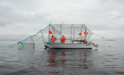 Försök med laxfiske