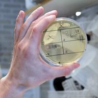 biochemistry_lab_SLU.jpg