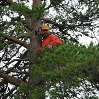 database_for_forest_owner_analysis_DBFOA_SLU.jpg