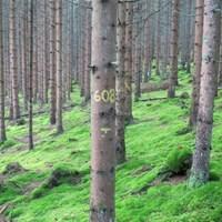 Unit_for_Field-based_Forest_Research_SLU.jpg