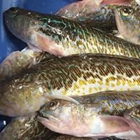 Fish_data_SLU.jpg