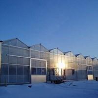 Greenhouses_SLU.jpg