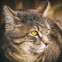 cat-4085621_960_720sujupixabay.jpg