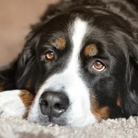 dog-2668993_960_720doanmepixabay.jpg