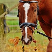 horse-1006376_960_720Alexas_Fotospixabay.jpg