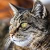 animal-3534084_960_720 OliverLakenmacher Pixabay.jpg