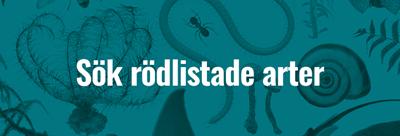 rodlistade-arter-knapp.png
