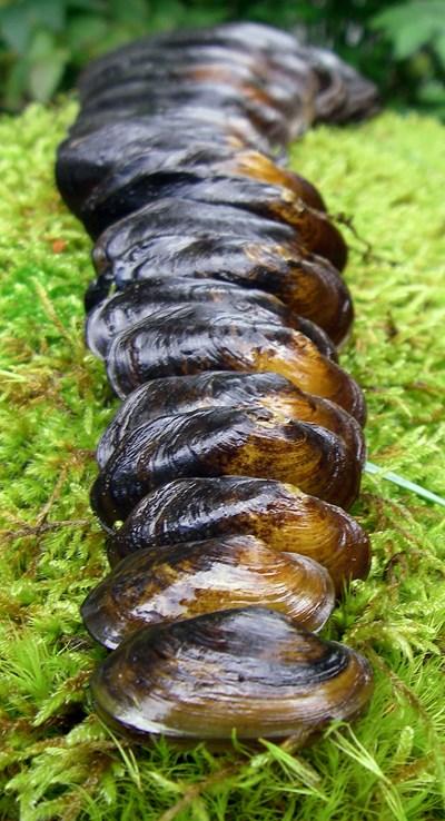 Användningsområden musselportalen. Foto: Jakob Bergengren