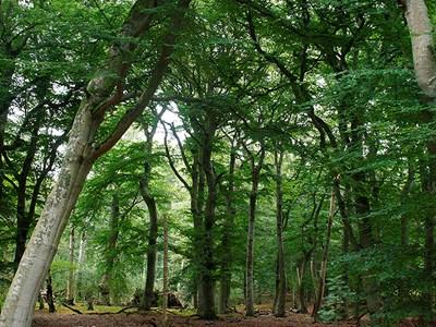 Skog Foto: Johan Samuelsson
