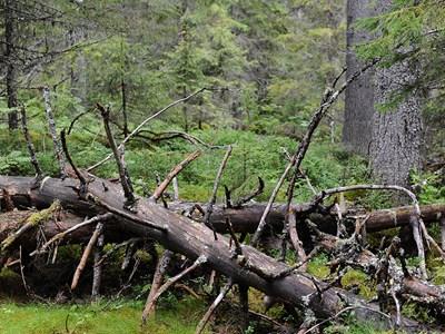 Urskog i Ångermanland. Foto: Torbjörn Östman