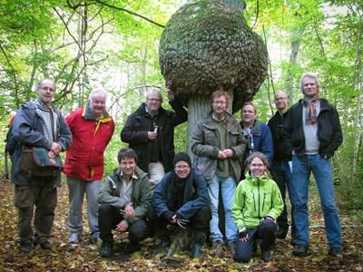 expertkommittén för svampar
