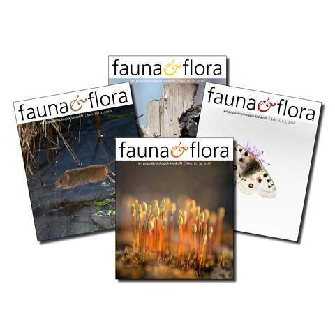 artdatabanken.se-tidskriften-faunaochflora-2.jpg