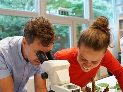 mikroskop 880x660.jpg
