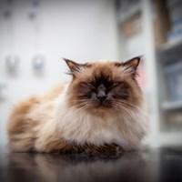 Katt på undersökningsbord, foto.
