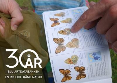 En bok med fjärilsillustrationer uppslagen och ett finger som pekar på bilden. Foto