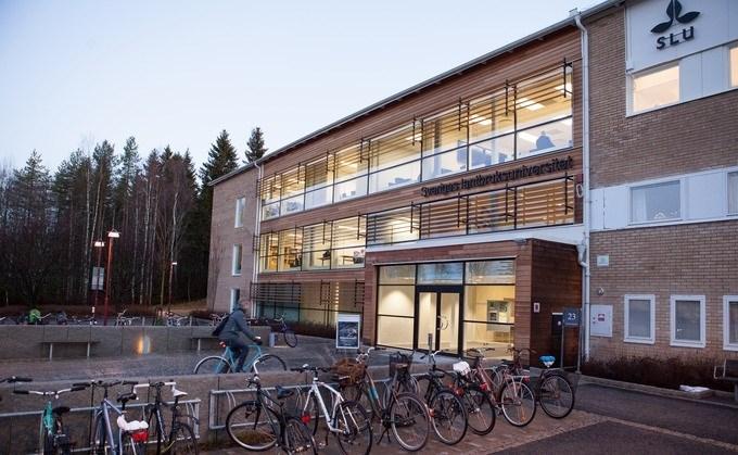 Campusbyggnad i Umeå, foto