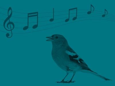Illustrerad fågel med musiknoter mot blå bakgrund