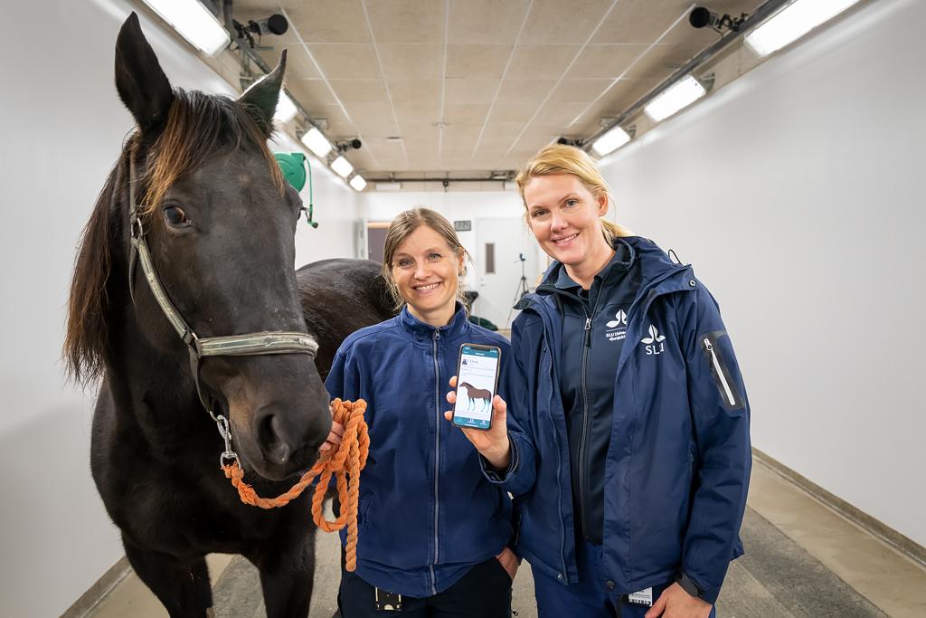 Hopp för halta hästar - nu investerar SLU Holding i Sleip AI